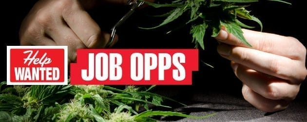 Marijuana Job Opportunities