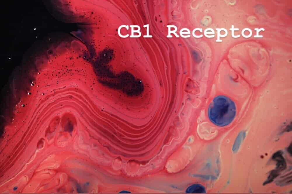 cb1 receptor marijuana psychoactive effect