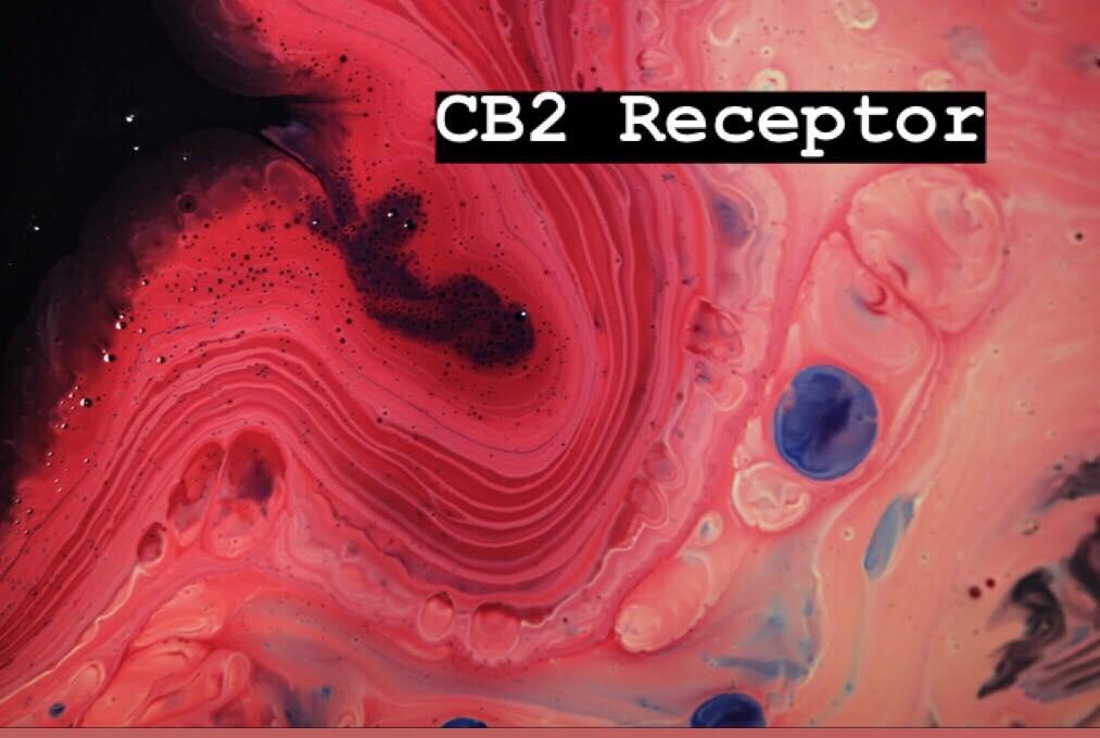 cb2 receptors cannabinoid endocannabinoid