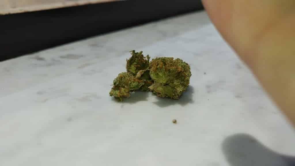 head cheese cannabis