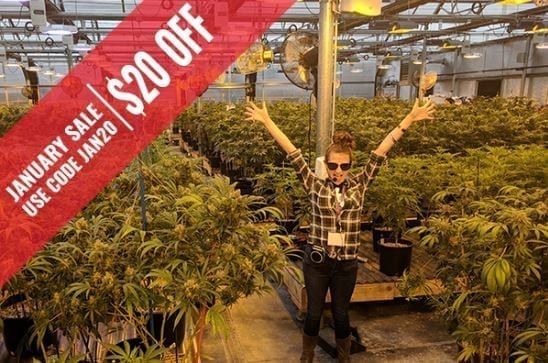 business cultivation cannabis greenhouse grow tour my 420