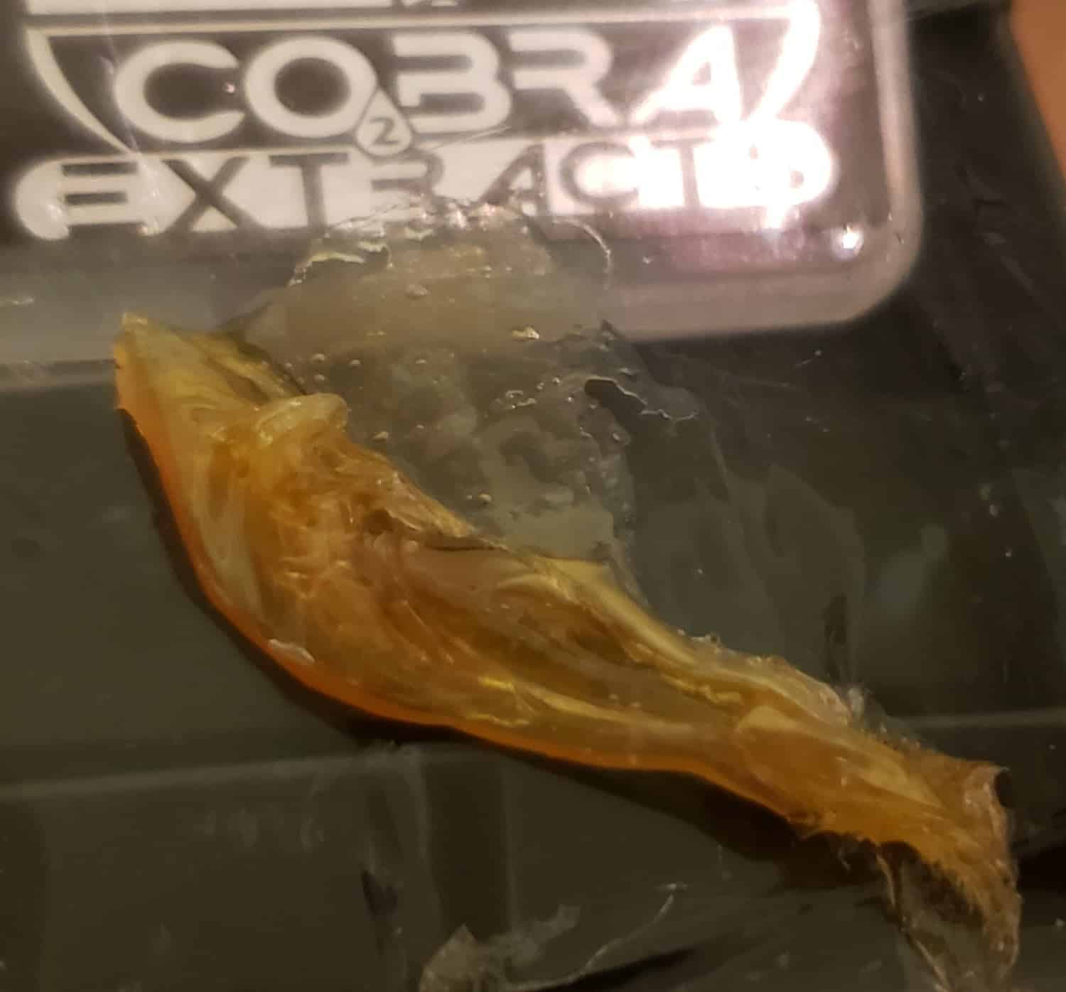 Cobra Extracts Mimosa Shatter
