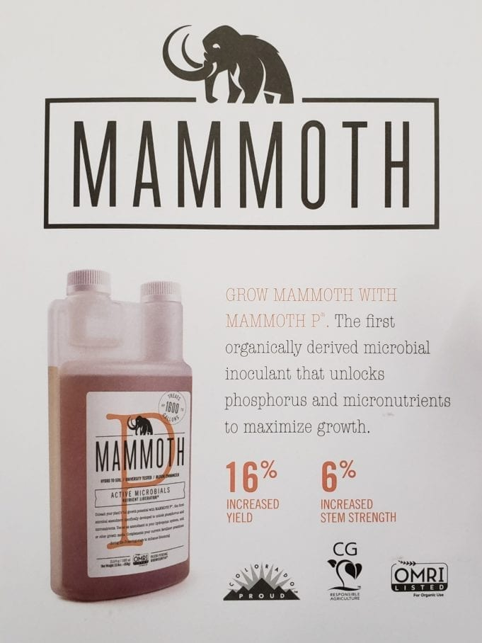 Mammoth Mammoth P Business Review