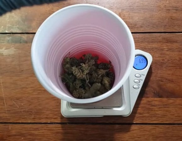 weighing marijuana flowers on a scale
