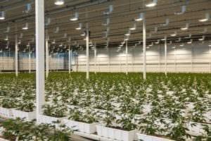 Aurora Cannabis Canadian facility
