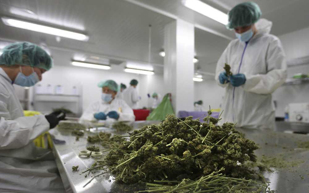 Marijuana-Pesticide-Testing-lab