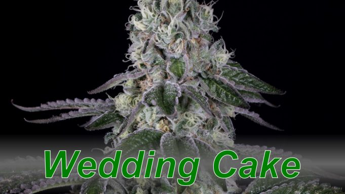 Wedding_Cake_cannabis_strain