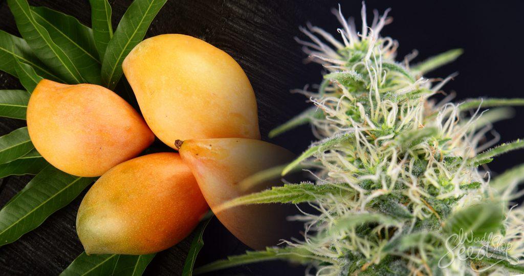 Weed_Mango