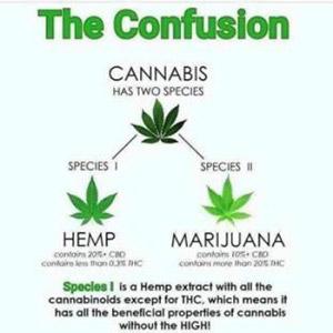 cannabis-species