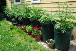 growing-containers